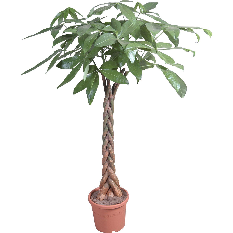 Rostliny prodej online dating