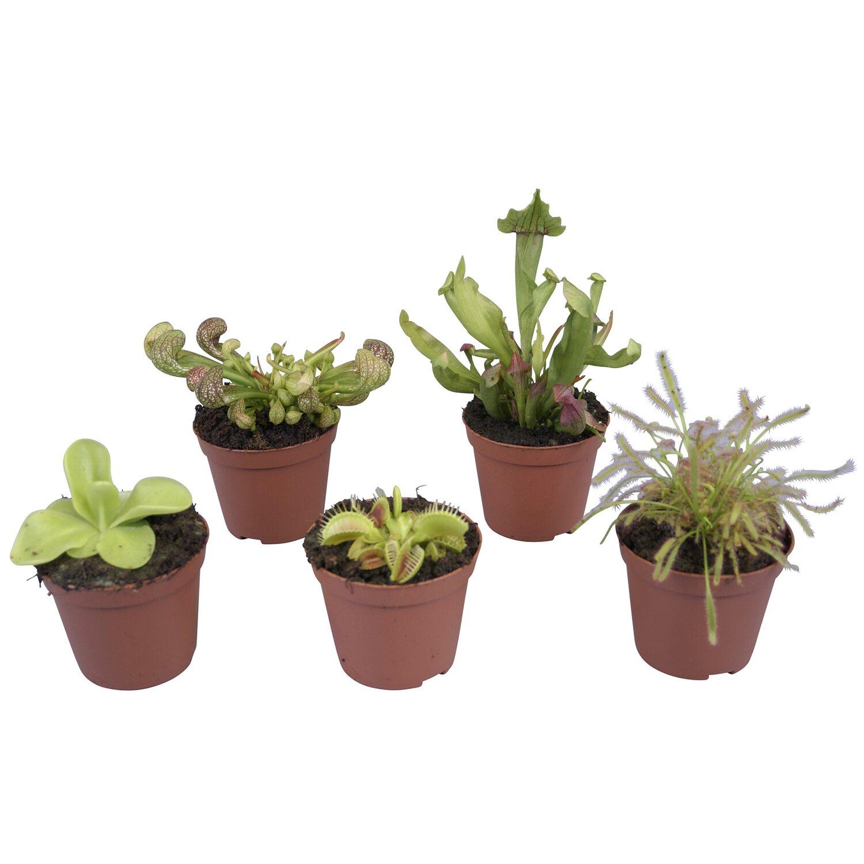 Atlas pokojovych rostlin online dating