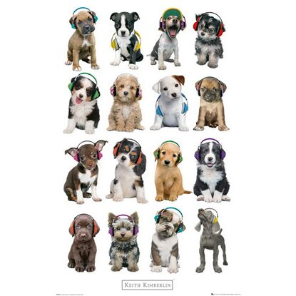 Maxiposter 61 cm x 91,5 cm Keith Kimberlin - Puppies headphones