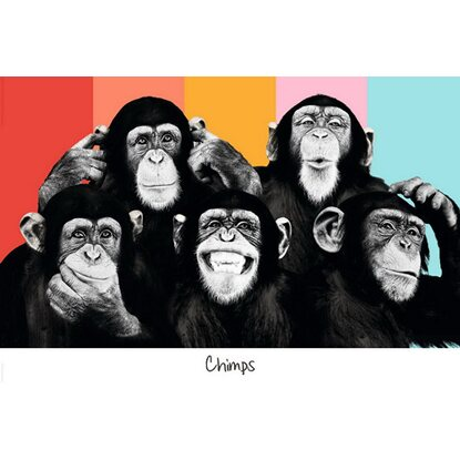 Maxiposter 61 cm x 91,5 cm The Chimp - Compilation